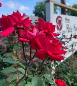 Sign with Roses